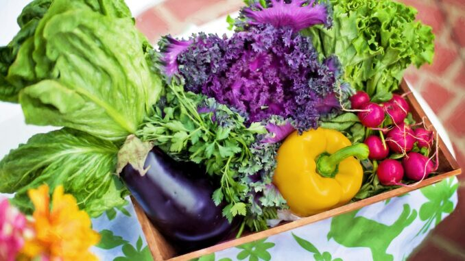 best plant-based diet to lose weight